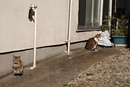 甲府まち猫日記