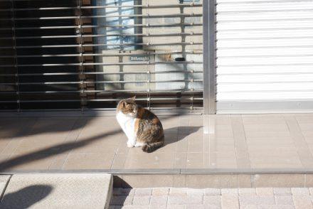 甲府まち猫日記⑥